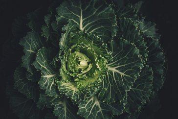 cabbage-leaves-lettuce-212932