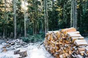 snow wood forest firewood