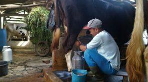 Indodairy-600x337