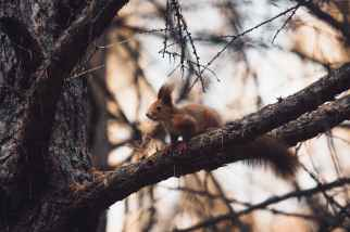 close up photo of squirrel on tree branch